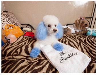 巴西专门开办了一家狗狗情侣酒店
