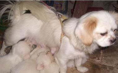 刚出生的幼犬3个喂养要点